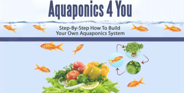 aquaponics4you3