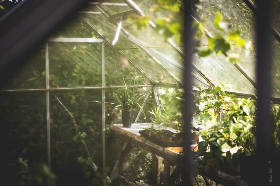 greenhouse-691704_960_720