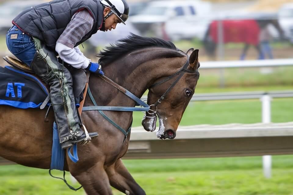 racehorse-419742_960_720