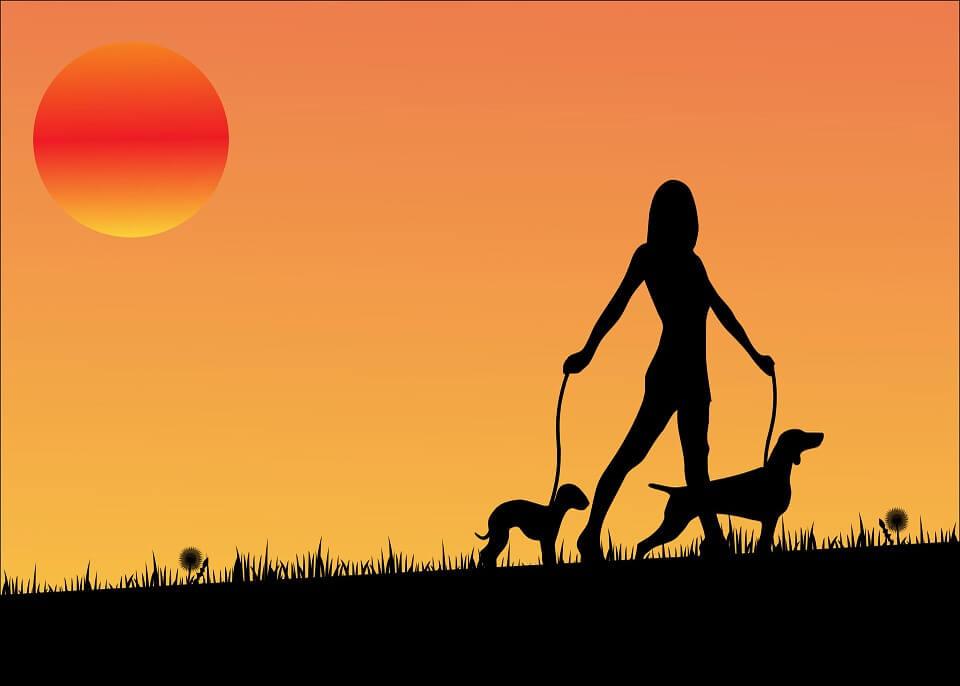 sunset dog walking